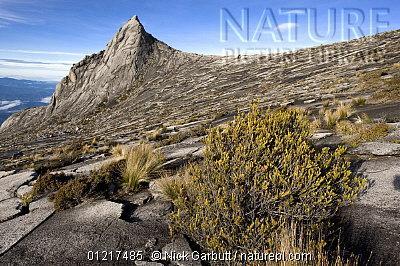 image 4954 of Summit Trail, Kinabalu Park