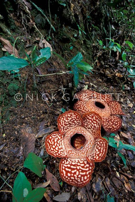 image 4936 of Tambunan
