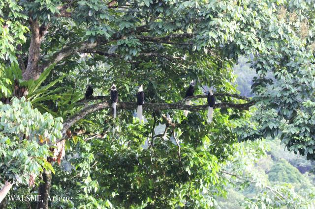 image 8019 of Temburong